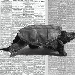 Slow journalism: se il giornalismo punta alla qualità