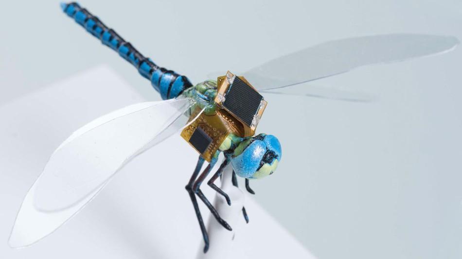 Insetto drone nanotecnologia