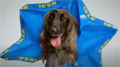 Trasformare le borse IKEA in impermeabili per cani: quando una busta della spesa diventa un creativo strumento di marketing